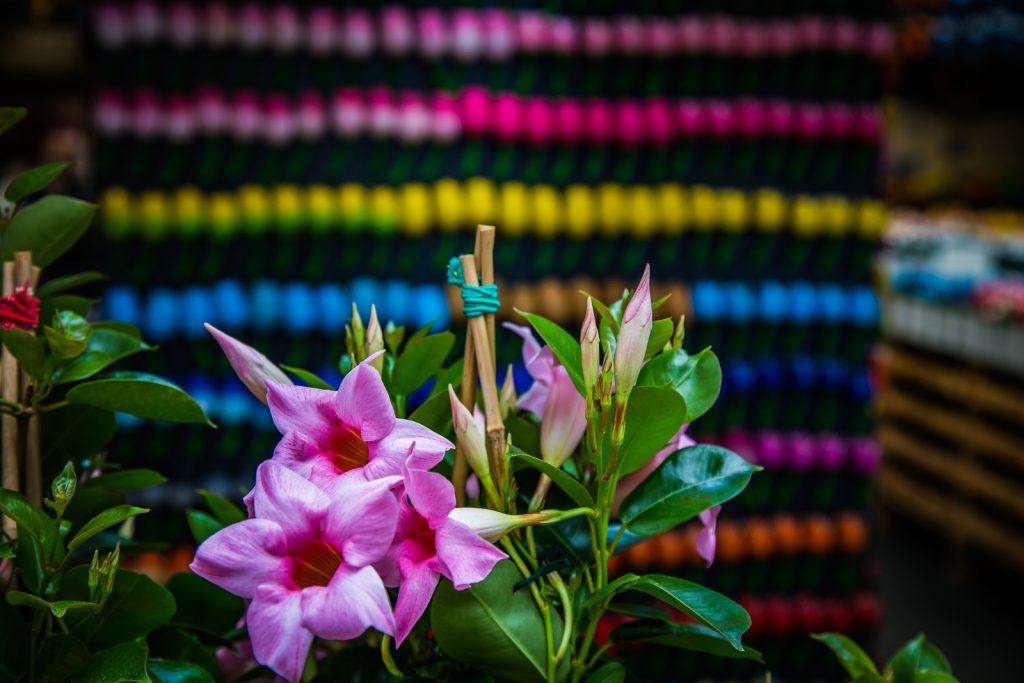 Blumen in Amsterdam | Norbert Eder Photography