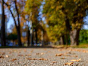 Der Herbst ist da!   fotomontag   Norbert Eder Photography