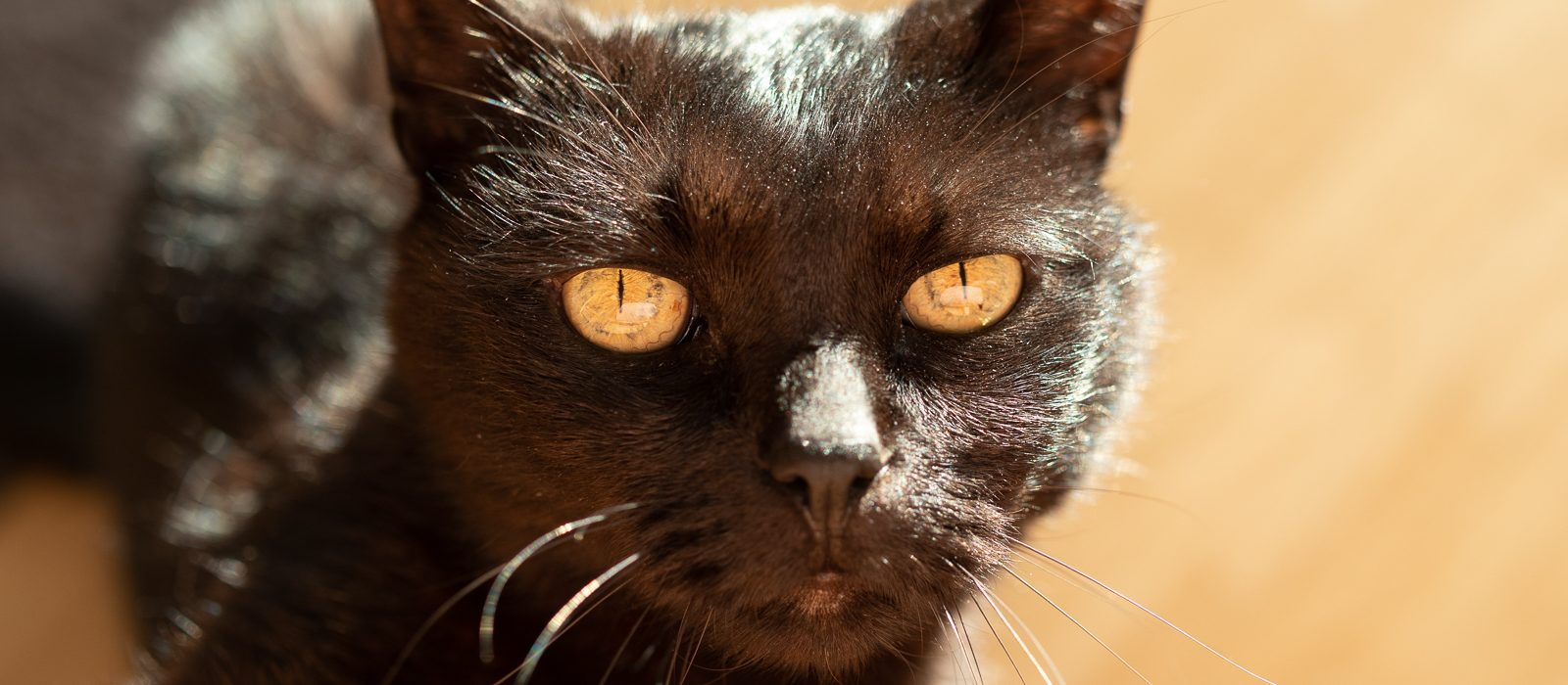 Foto Trick - zentrierte Katze | Norbert Eder Photography
