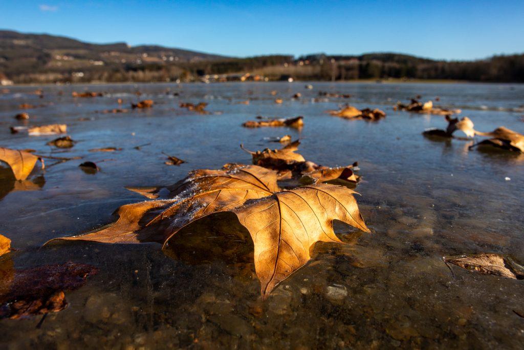 Blatt im Winter | Norbert Eder Photography