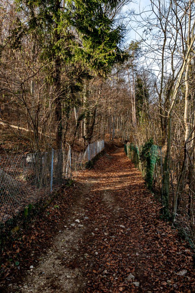 Wanderweg am Neupauerweg