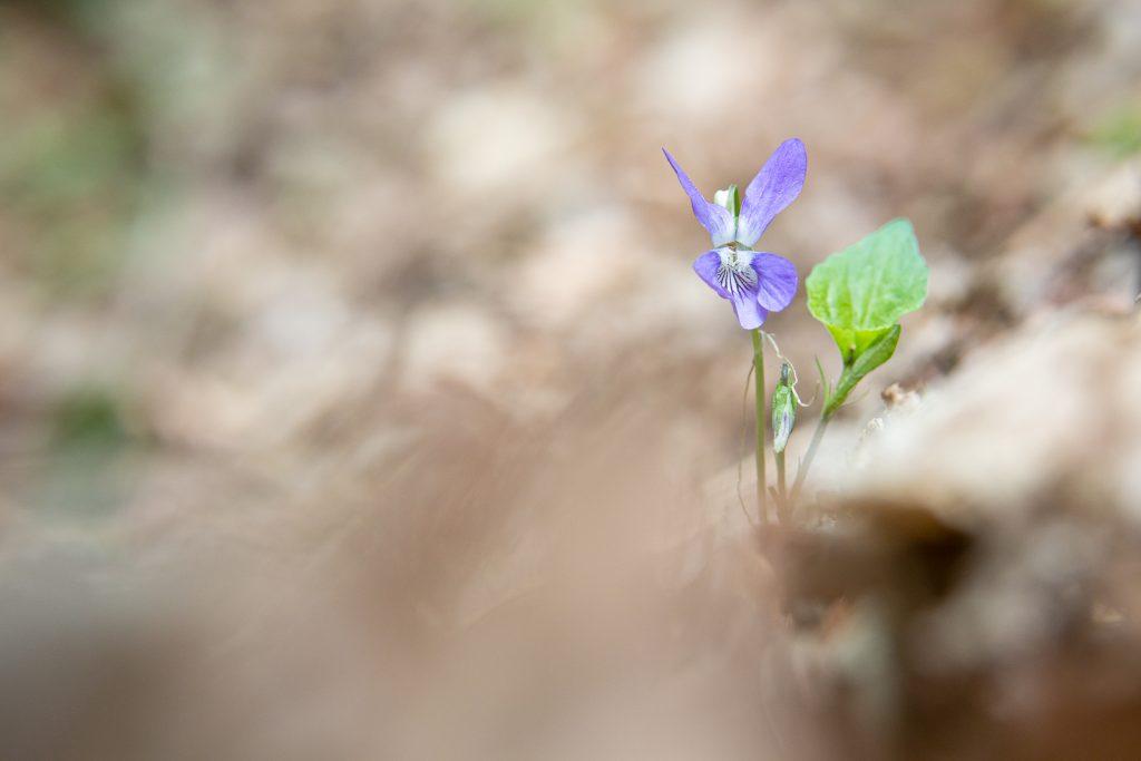 Blume | Norbert Eder Photography