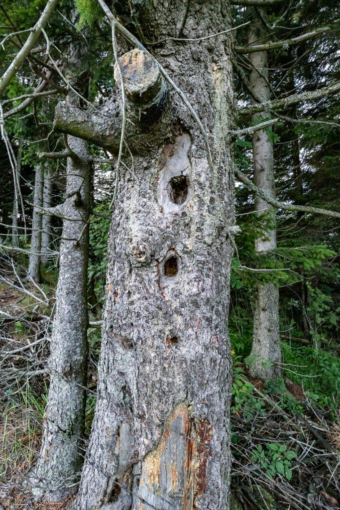 Wanderung Steiermark: Teichalmsee - Heulantsch - Runde