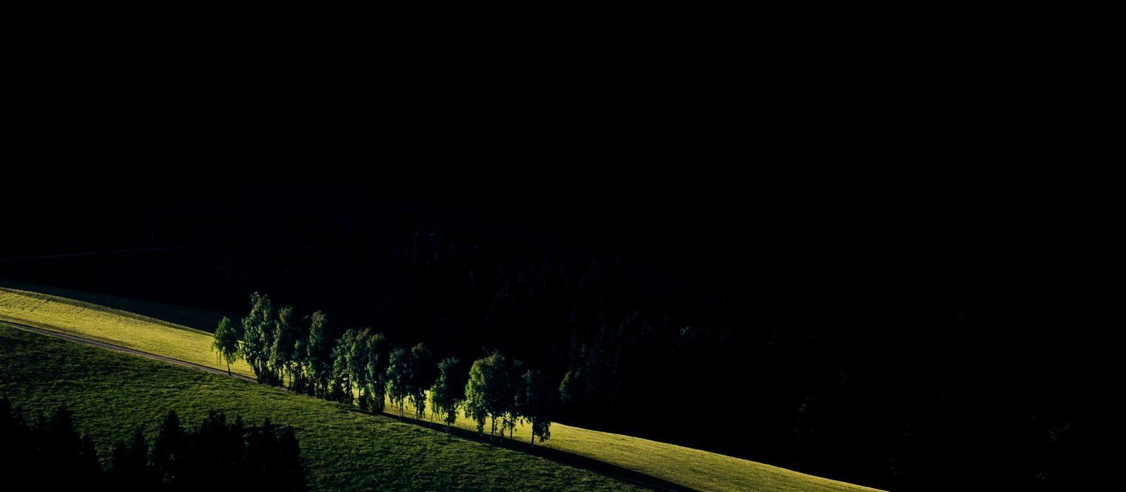 Kleiner von der Sonne beleuchteter Hang in dessen Mitte Bäume in einer Reihe stehen. Vordergrund und Hintergrund liegen schon komplett im Schatten, wodurch die beleuchteten Bäume hervorstechen.